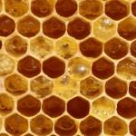 Fermenting-honey