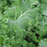 Flat Kale